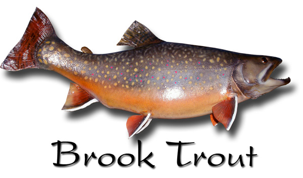 Brook trout  Oregon Department of Fish amp Wildlife